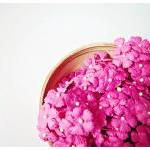 10 Flat mini mulberry paper flowers..