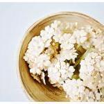 10 Flat mini mulberry paper flowers..